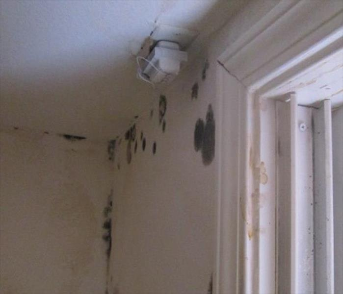 Mold Infested Room in Silt